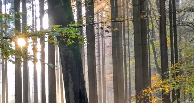 Forets Luxembourg