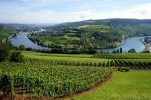Les vignes de la Vallée de la Moselle Luxembourg-Allemagne