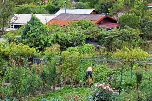 Community gardens Luxembourg
