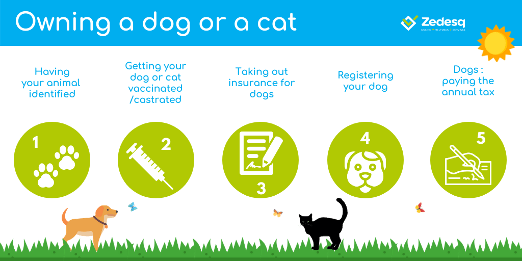 Owning a dog or a cat in Luxembourg. What formalities?