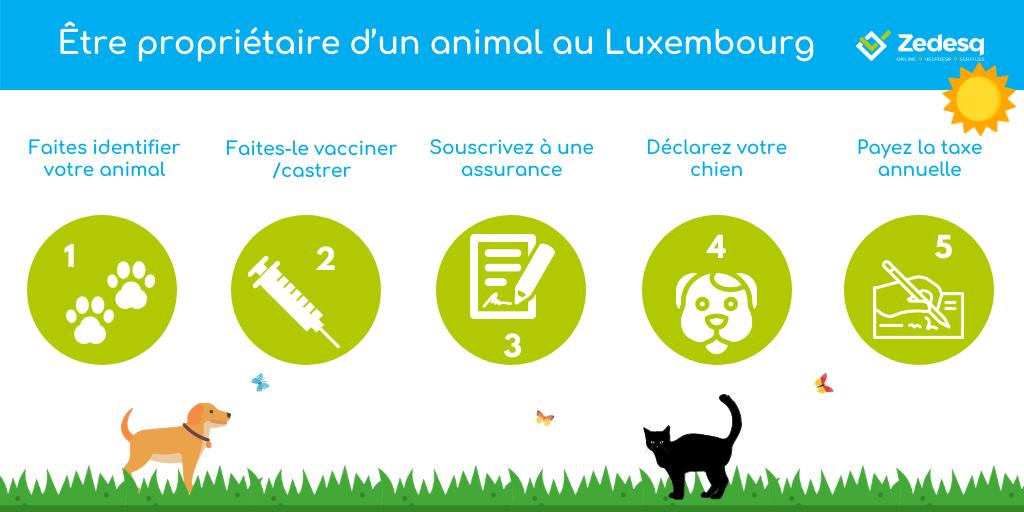 Adopter un animal ou être propriétaire d'un animal au Luxembourg