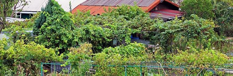 Partager un jardin potager au Luxembourg