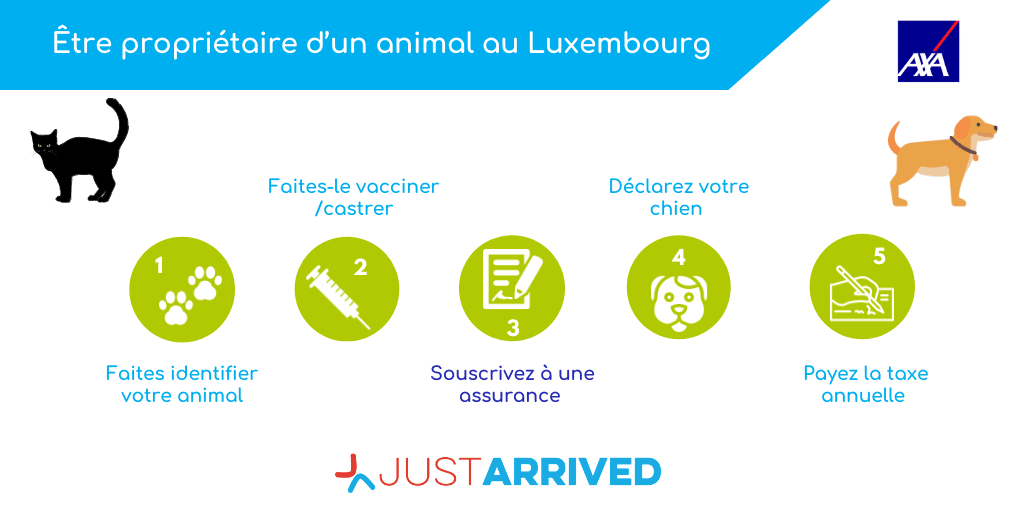 Etre propriétaire d'un chien ou un chat au luxembourg